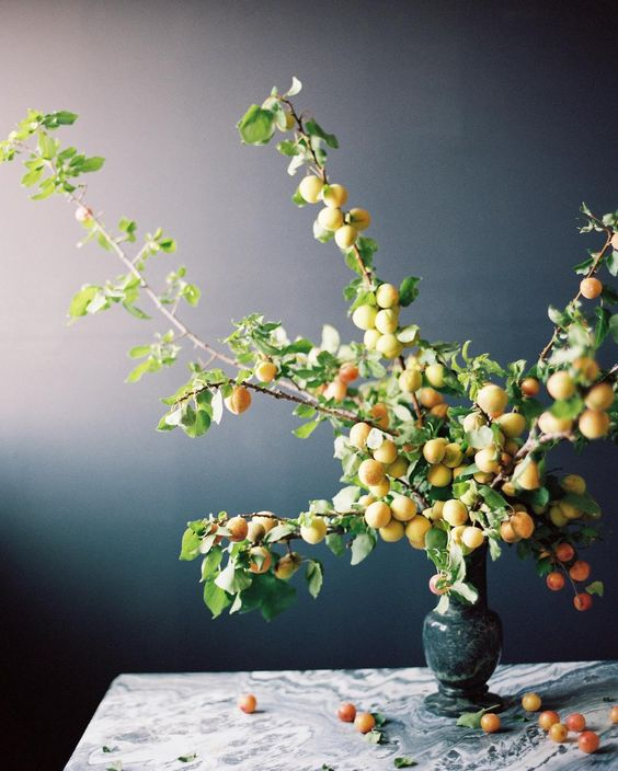 Apricot branch display on botanical artist Charlotte Argyrou blog
